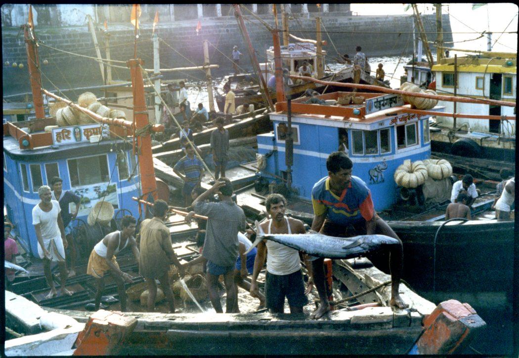 Mumbai - Sassoon Docks